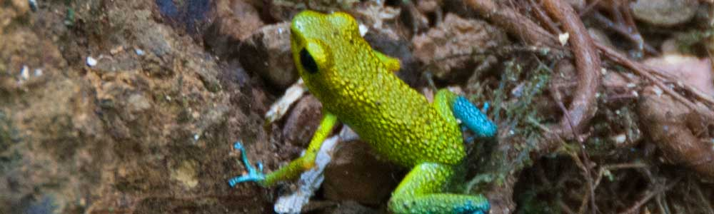frog-cropped