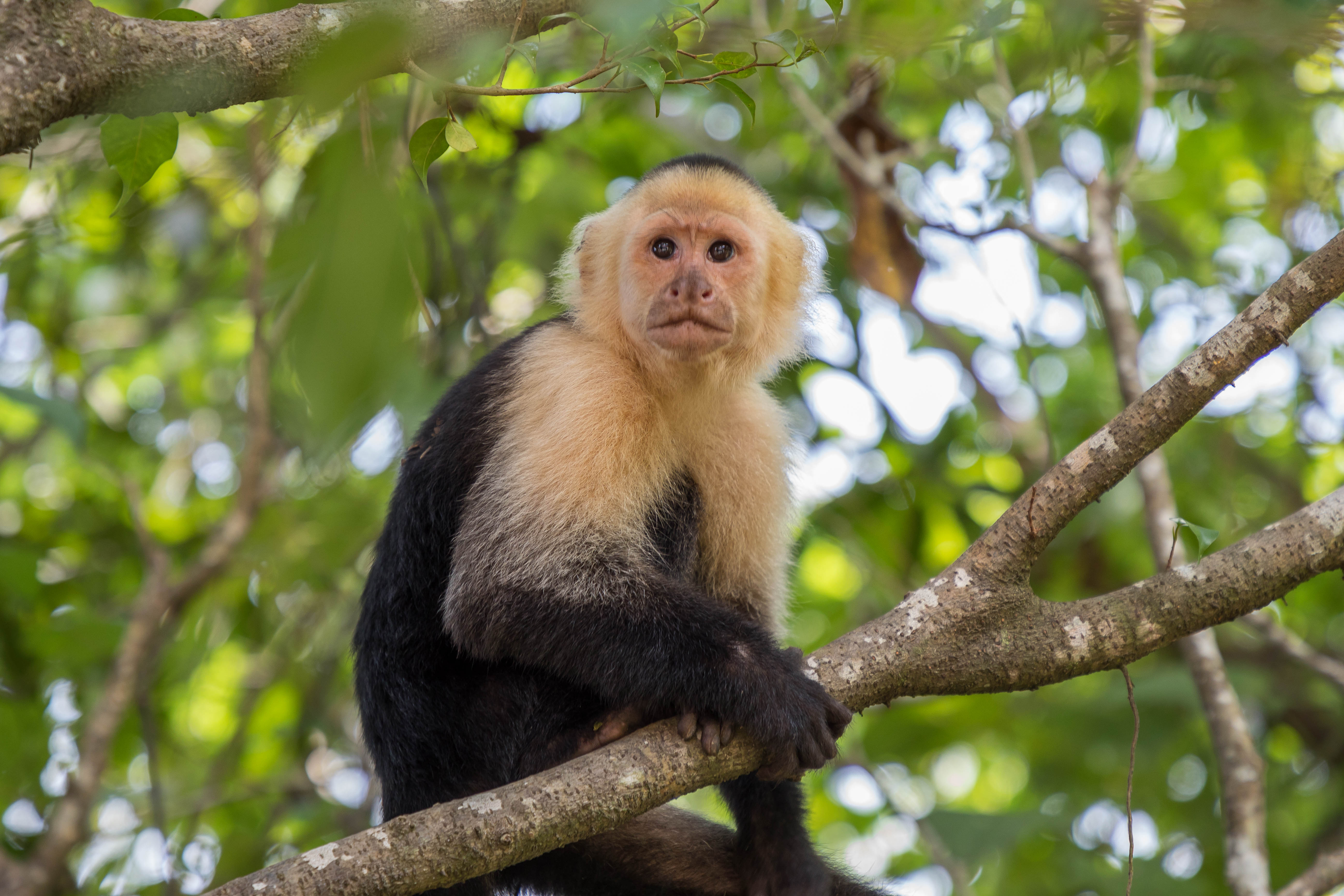 One of our Local monkey's