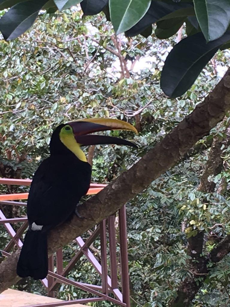 Casa Feliz toucan