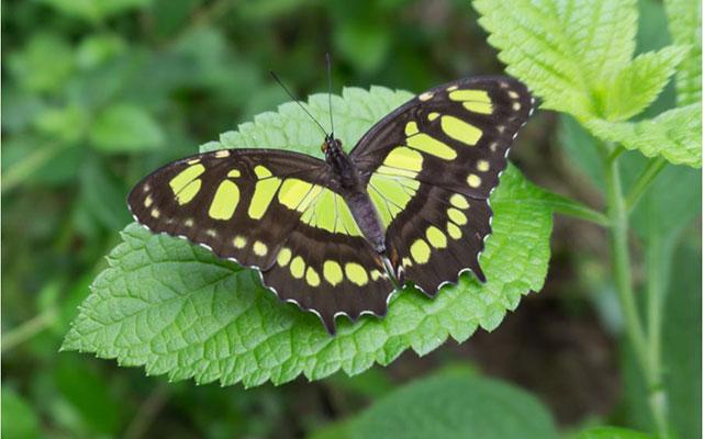 Casa-Pura-Paz-butterfly