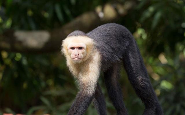 Casa-Pura-Paz-capuchin