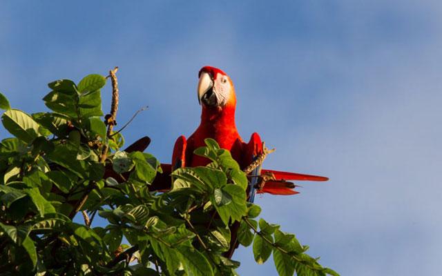 Casa-Pura-Paz-macaw