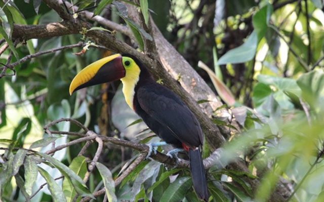 Casa-Pura-Paz-toucan