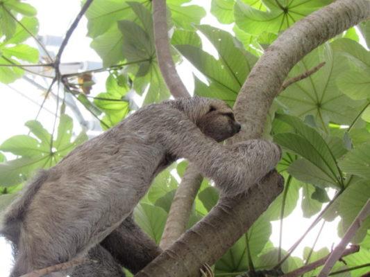 Our prescious sloths