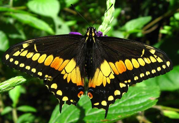 Manuel Antonio Vacation Rentals: Butterfly Garden 2
