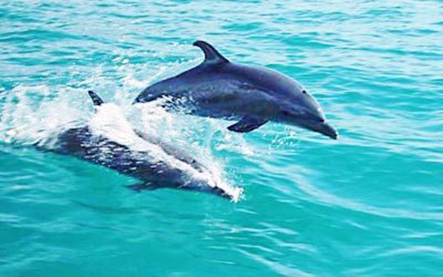 Manuel Antonio Vacation Rentals: Planet dolphin 2