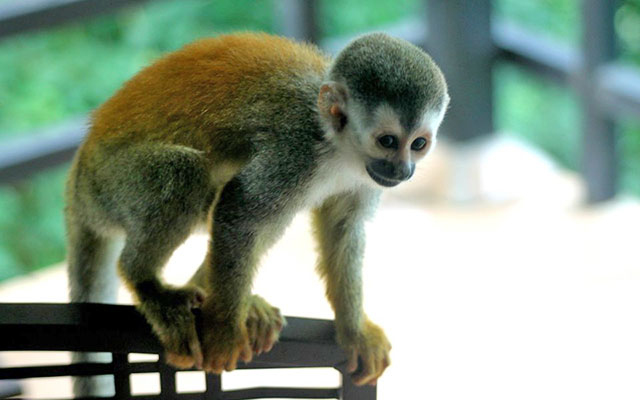 Costa Rica Rental home: Villa Playa Mono - Titi