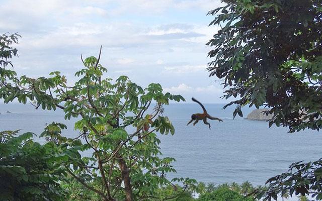 Manuel Antonio Vacation: Villa Playa Mono - Titi and view