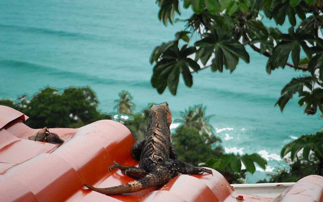 Manuel Antonio Vacation Rental Homes: Villa Playa Mono - ctenasaur