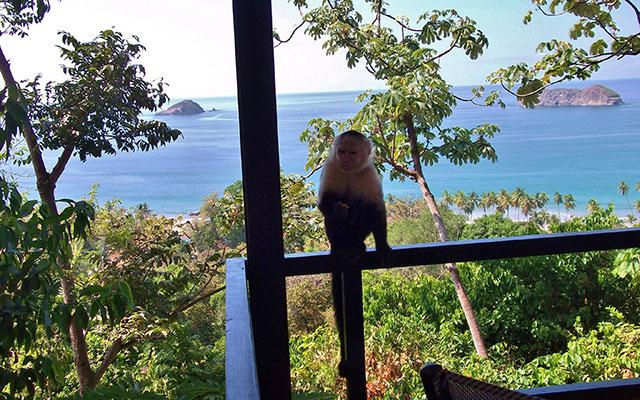 Manuel Antonio Vacation Rental Homes: Villa Playa Mono - monkey