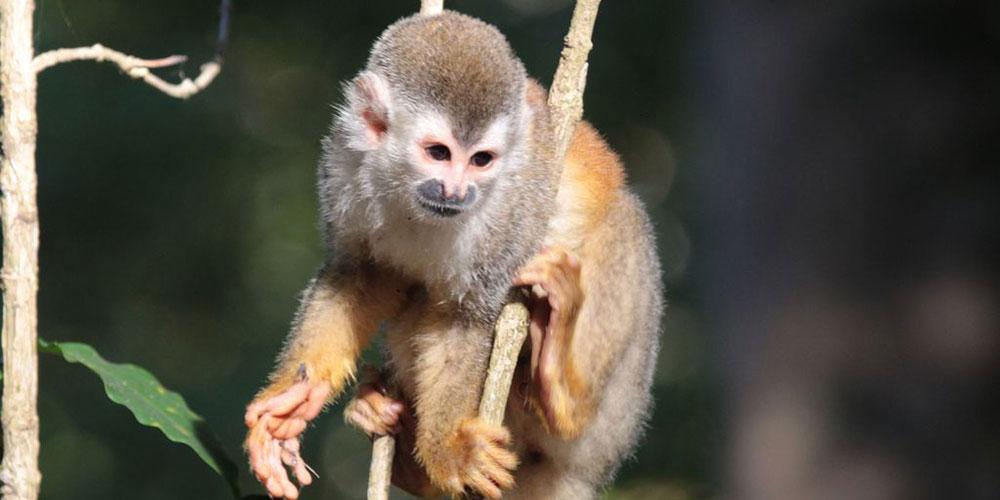 Villa Marbella titi monkey