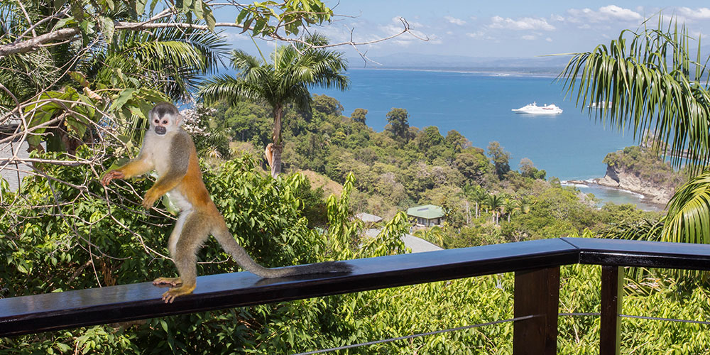 Tulemar 405 titi monkey on balcony