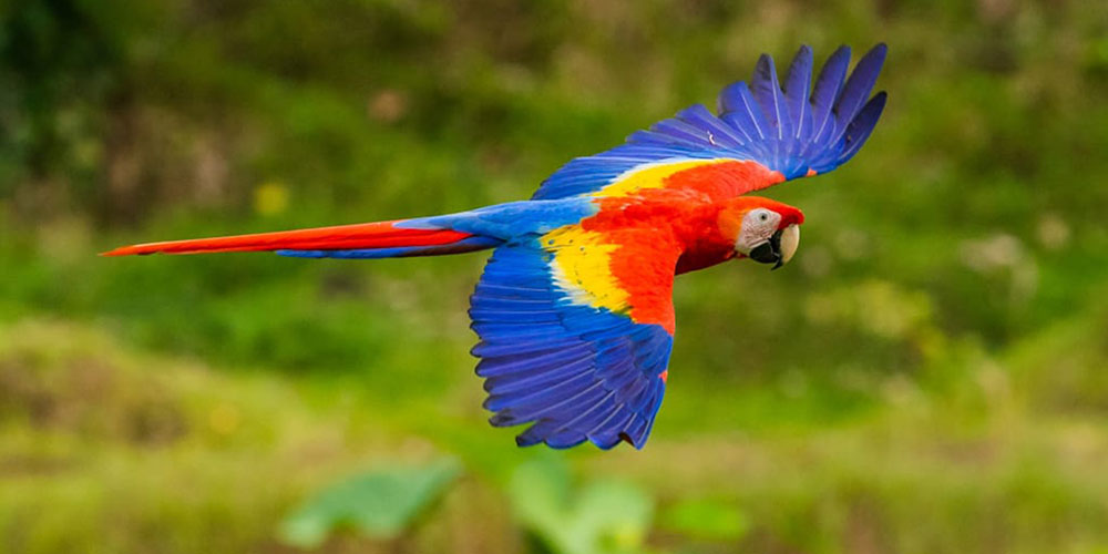 Casa Contee macaw